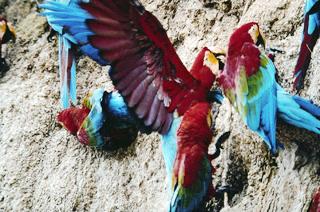 マヌー国立公園の画像 p1_21