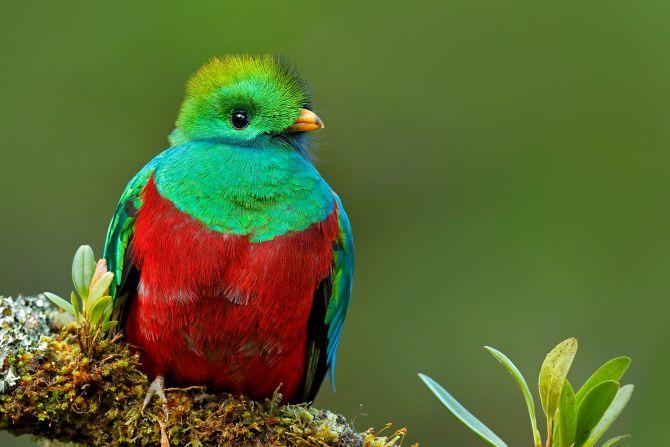 幻の鳥ケツァールを求めて コスタリカ10日間 , 中南米・ペルー